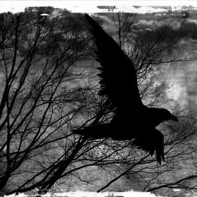 raven4734