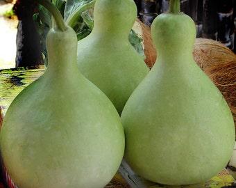 thai round bottle gourd 50 seeds, heirloom vegetable seeds