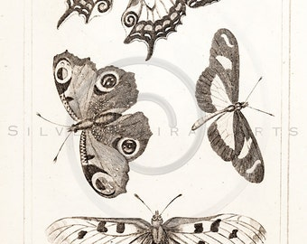Vintage Butterflies Printable Illustration 1800s Antique Butterfly Print Digital Image Clip Art Retro Drawing Instant Download Graphic ZS