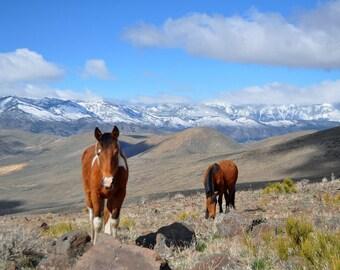 Wild Horse. Wild Mustang. Mustang. Horse Art