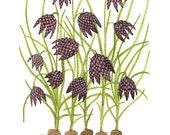fritillaria bulbs botanical print, botanicals, giclee art print, botanical art, floral art, spring blooms, watercolor print