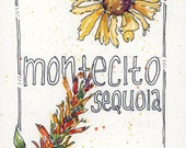 Montecito Sequoia Wildflowers ~ an original watercolor