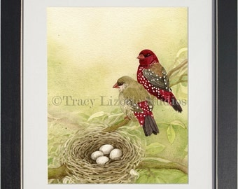 Finch Family- an archival watercolor print by Tracy Lizotte