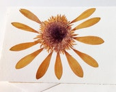 Sunflower Dried, Botanical Note Card, Pressed Greeting Card, Dried Floral Blank Card