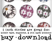 Magnets, Bottlecaps, 1 Inch Circles (25mm) Digital Collage Sheet has Glitter Silver Background with Rainbow Colored Daisy Flowers and Vines