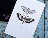 Moths / Lepidoptera 'specimen' (noir) - Limited edition one-colour screenprint