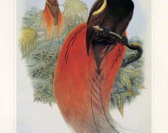 CLEARANCE Vintage Book plate of Bird of Paradise