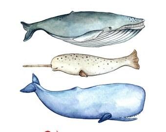 S'whale Print 8.5x11