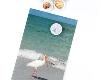 Shell Magnets- Set of 6 Magnets - Florida Shells - Fla. Beach Magnets - Strong Magnets - Original Images - Refrigerator Magnets - Locker Art