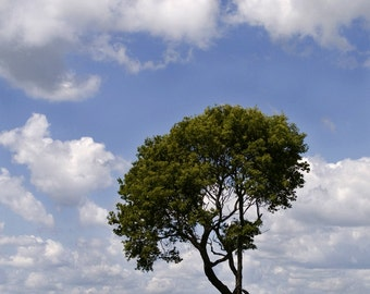 Single Tree Big Clouds Blue Sky