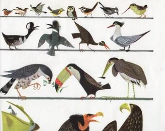 Vintage print BIRDS, mid century style illustration nursery decor bedroom decor