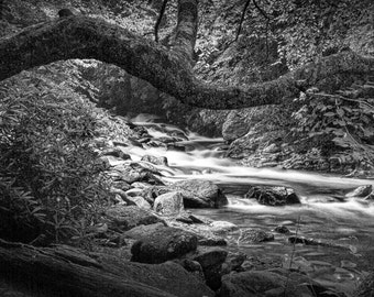 Smokey Mountain Stream in The Great Smoky Mountain National Park in Tennessee No.546BW A Black and White Fine Art Landscape Photograph