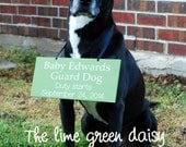 Guard Dog - Pregnancy Announcement