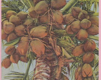 "Ca. 1940's ""Coconut Tree"" In Fla. Linen Topographical Picture Postcard - 642"