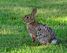 Nursery Decor, Cute Bunny Brown White Camouflage Brush Rabbit, For Child, Nature Photography, Fine Art Photography matted & signed 5x7 print