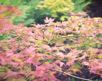Flower photography, Japanese, maple, pink, red, green, nature, flower, flora, fall, autumn, botanical wall decor, Christmas, under 50