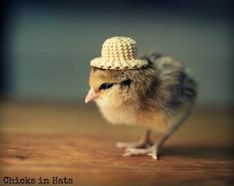 Photo Print 8x10 Chick Wearing A Straw Hat Photograph