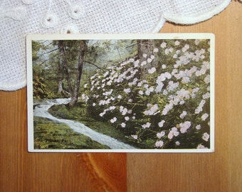 Vintage Postcard, Mt. Pocono, Pennsylvania, Early 1900s Paper Ephemera