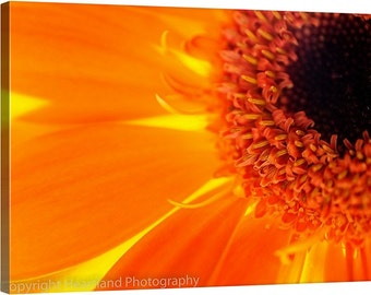 Orange Canvas Art, Nature Photography, Macro Photo Canvas, Orange Daisy Print, Nature Canvas Print, Orange Wall Art, Orange and Brown