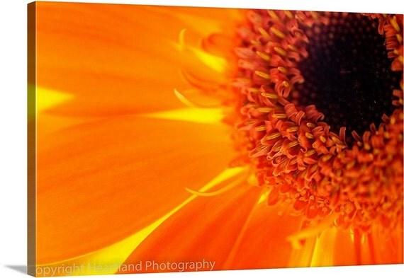 Orange Canvas Art, Nature Photography, Macro Photo Canvas, Orange Daisy Print, Nature Canvas Print, Orange Wall Art, Orange and Brown