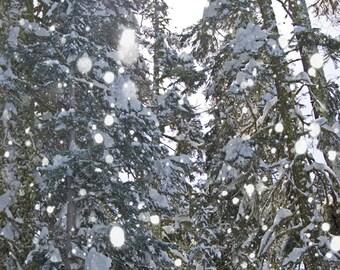 Art Print winter wonderland, snow, trees, pine, sunburst