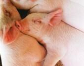 Sleeping Pink Piglets