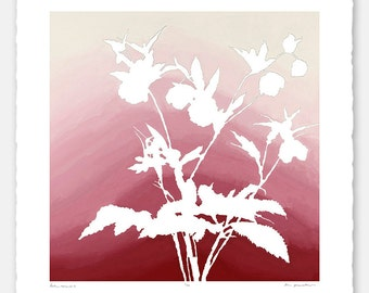 Limited edition botanical print with hand torn edges - Lenten Rose No. 4