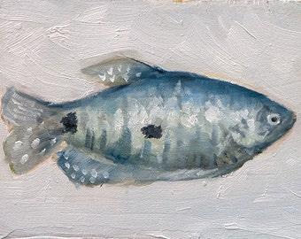 Blue, Gray, Green Gourami Fish, Tropical, Aquarium, Original Oil Painting on Wood by Clair Hartmann
