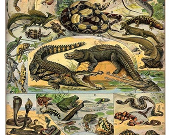 antique french illustration reptiles turtles aligator snakes digital download