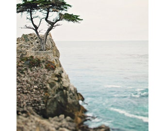 "Lone Cypress Photograph  - Monterey California - 17 Miles - Nautical Sea Decor - Travel Photography - Isolated Tree -  ""Lone Cypress"""