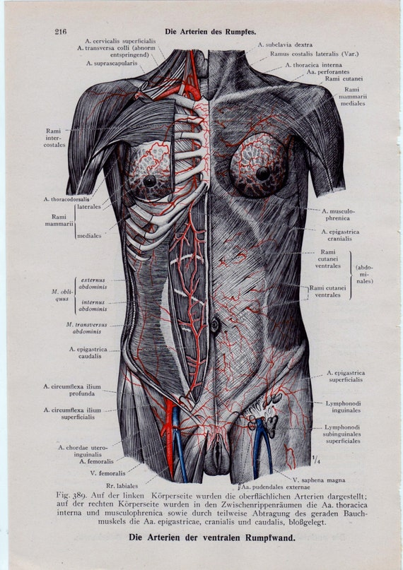 Items Similar To Mature Medical Page Anatomical Diagrams Female Nude Breast Vagina -7796