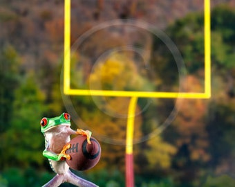 A Tree Frog with Ball, Football, Sports Frog