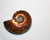 Fire Ammonite Fossils (Opalized) Madagascar