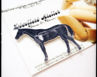 Year of the Horse Anatomical Horse Magnetic Brooch - Wearable Black and White Anatomical Horse Illustration Pin