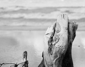 Black and white beach photography: driftwood textured tree stump, cloudy sky, waves; zen art, beachy decor, cottage chic relaxing art nature