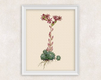 Cactus Succulent Botanical Print - Pink & Green Flower Art - Home and Garden - 8x10 Botanical Art Print -  Item #148