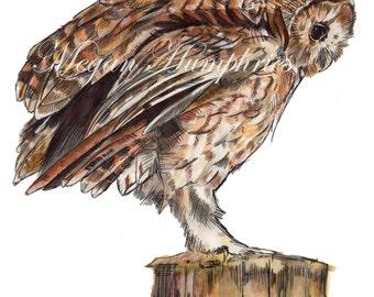 Limited Edition 'Tawny Owl' Giclée Prints - nursery art - Room Decor - Wall Art