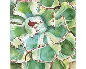 11x14 realistic watercolor PAINTING agave plant succulent wall art (fine art poster print green leaves botanical decor garden nature art)