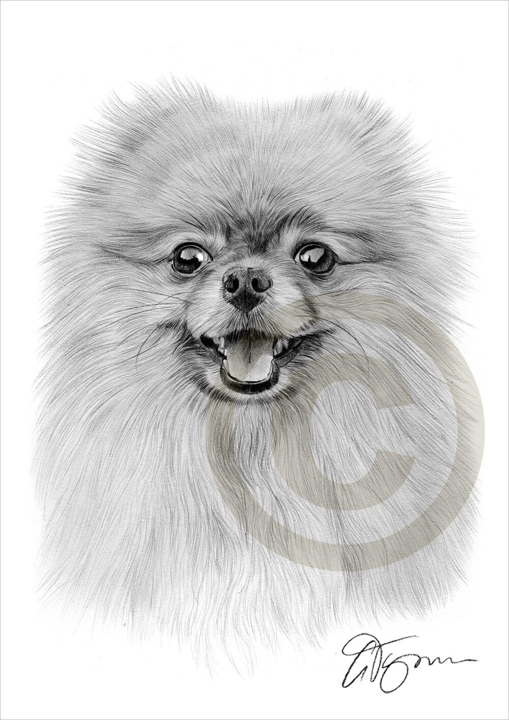 Giocattolo cane pomerania matita disegno stampa formato a4 for Cane disegno facile