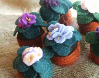 FREE SHIP Three-pack: Bottecap African Violets made to order