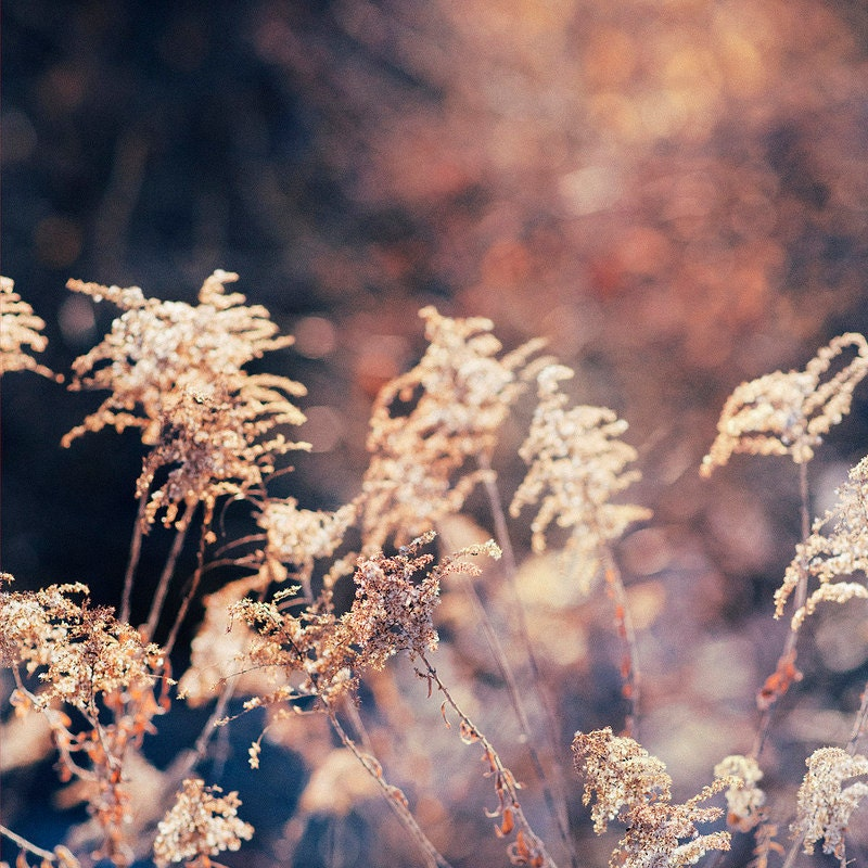 Kansas Winter Bokeh Landscaper Trina Baker Photography gallery32 etsy