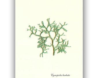 Original seaweed pressing, Seaweed art, Green pressed Seaweed, natural sea fan, Botanical algae, coastal Wall Art, beach cottage decor 5x7