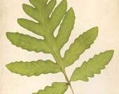 Botanical Print, Fern Art, Nature Photography, Woodland Wall Decor, Fern Print, Wall Art, Botanical Art Print