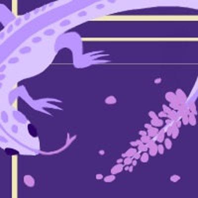 lavenderlizard