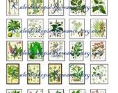 Dollhouse Miniature Vintage Botanical Pages - Printable Digital