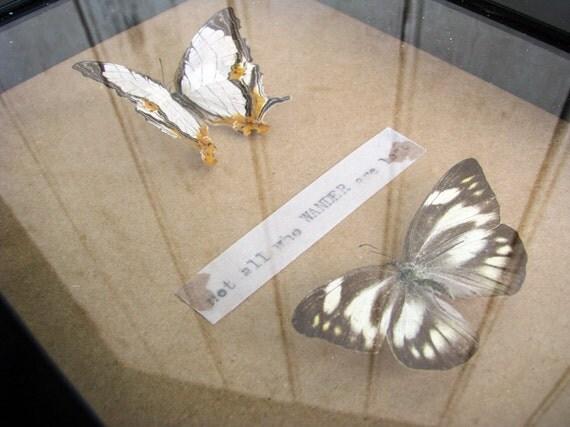 Fauna- Specimen Shadow Box