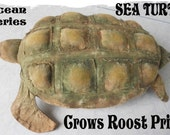 Turtle  Crows Roost Prims 363e Primitive Ocean Series Sea epattern  SaLE immediate download