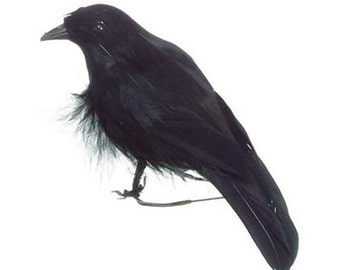 Halloween Raven bird decoration, prop Poe feathered  black   stuffed  altered art craft design  goth creepy medium supplies