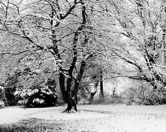 Winter Snow Photography, Rustic woodland forest art, Nature landscape Wall Decor, Snow branches, Black and White 8x12 tree photograph
