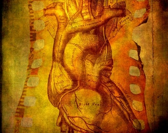 Anatomical Heart Decor, Medical Anatomy Print, Natural History, Surreal Decor, Orange, 8x8 inch Fine Art Photography Print, Exquisite Rage